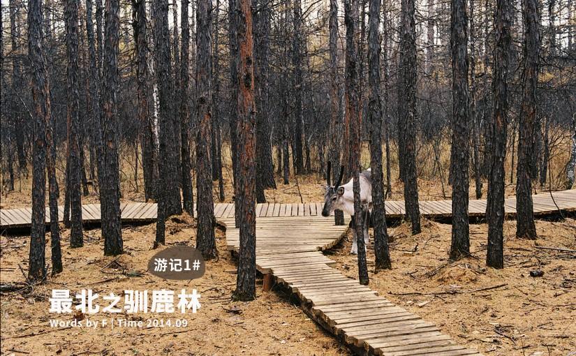 驯鹿森林游记/攻略内蒙古游记{游记1#最北}驯鹿林的图片