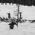 驯鹿森林图片集Genesis{摄影集5#}创世纪之西伯利亚的图片 第3张