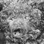 驯鹿森林图片集Genesis{摄影集5#}创世纪之西伯利亚的图片 第14张