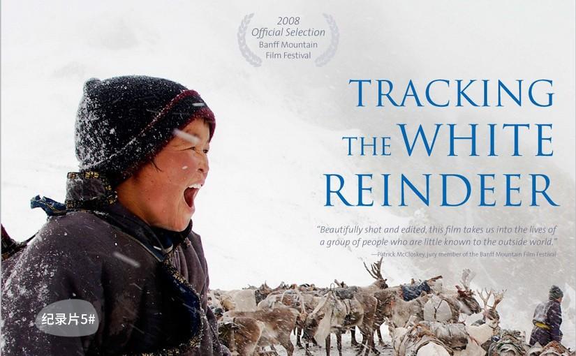 驯鹿森林电影/纪录片/舞台剧Becoming a Man: Tracking the White Reindeer{纪录片5#}寻找白色驯鹿的图片
