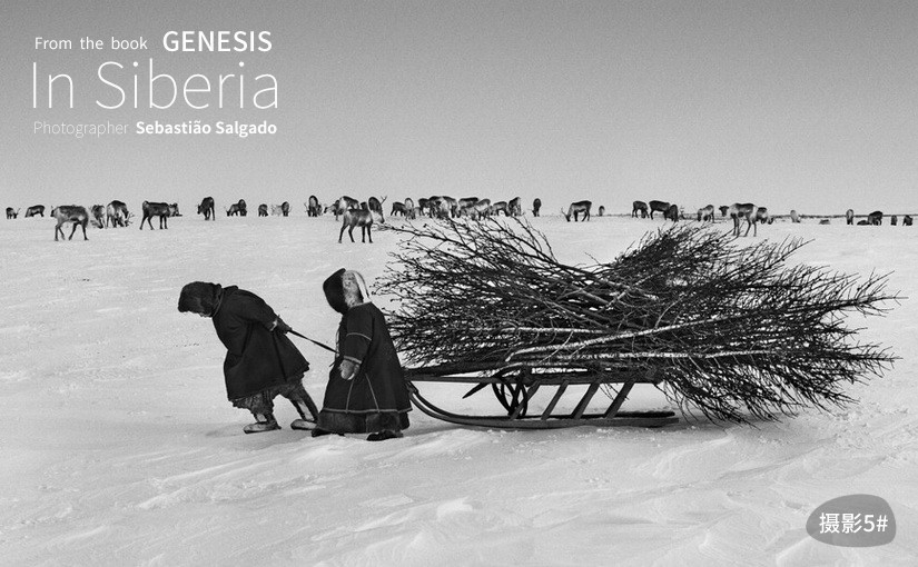 驯鹿森林图片集Genesis{摄影集5#}创世纪之西伯利亚的图片