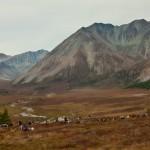 驯鹿森林图片集Becoming a Man: Tracking the White Reindeer{摄影集2#}TAIGA 泰加林的图片 第6张