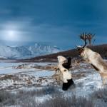 驯鹿森林图片集Becoming a Man: Tracking the White Reindeer{摄影集2#}TAIGA 泰加林的图片 第13张