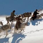 驯鹿森林图片集Becoming a Man: Tracking the White Reindeer{摄影集2#}TAIGA 泰加林的图片 第20张