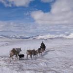驯鹿森林图片集Becoming a Man: Tracking the White Reindeer{摄影集2#}TAIGA 泰加林的图片 第24张