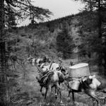 驯鹿森林图片集Dukha{摄影集8#}游牧民族的传统与革新的图片 第19张