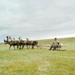 驯鹿森林图片集Dukha{摄影集8#}游牧民族的传统与革新的图片 第21张