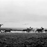 驯鹿森林图片集Dukha{摄影集8#}游牧民族的传统与革新的图片 第28张