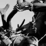 驯鹿森林图片集Dukha{摄影集8#}游牧民族的传统与革新的图片 第29张