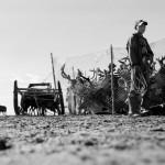 驯鹿森林图片集Dukha{摄影集8#}游牧民族的传统与革新的图片 第33张
