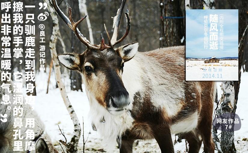驯鹿森林游记/攻略呼伦贝尔{网友作品7#}随风而逝-呼伦贝尔冬日纪行的图片