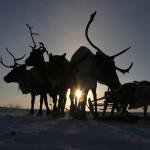 驯鹿森林图片集Arctic{摄影集9#}驯鹿牧民节的盛况图记的图片 第16张