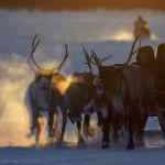 驯鹿森林图片集Arctic{摄影集9#}驯鹿牧民节的盛况图记的图片 第18张