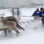 驯鹿森林图片集Arctic{摄影集9#}驯鹿牧民节的盛况图记的图片 第7张