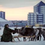 驯鹿森林图片集Arctic{摄影集9#}驯鹿牧民节的盛况图记的图片 第24张