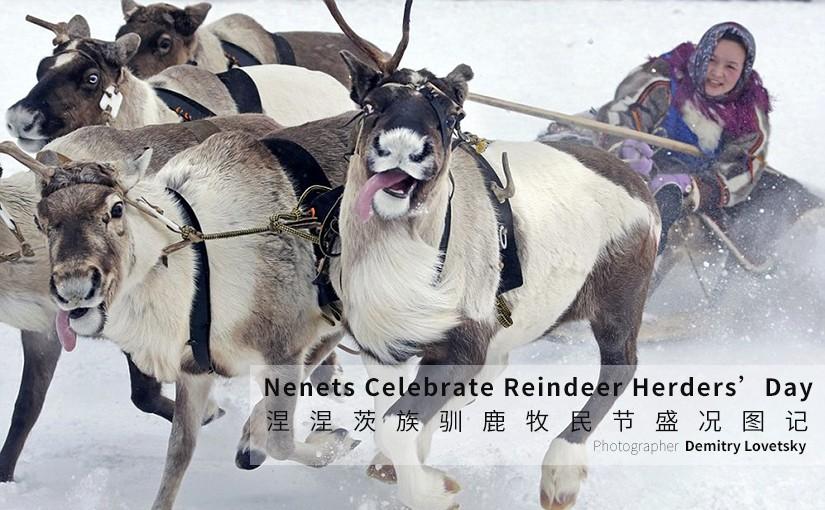 驯鹿森林图片集Arctic{摄影集9#}驯鹿牧民节的盛况图记的图片