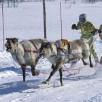 驯鹿森林图片集Norway{摄影集13#}同一镜头下的两个驯鹿民族的图片 第17张