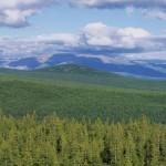 驯鹿森林图片集Norway{摄影集13#}同一镜头下的两个驯鹿民族的图片 第3张