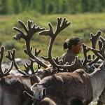驯鹿森林图片集Norway{摄影集13#}同一镜头下的两个驯鹿民族的图片 第6张