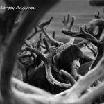 驯鹿森林图片集Nenets{摄影集12#}北极边城的传统与现代的图片 第27张