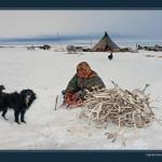 驯鹿森林图片集Nenets{摄影集12#}北极边城的传统与现代的图片 第24张