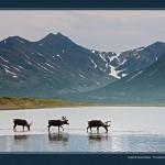 驯鹿森林图片集Nenets{摄影集12#}北极边城的传统与现代的图片 第13张