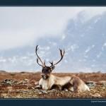 驯鹿森林图片集Nenets{摄影集12#}北极边城的传统与现代的图片 第17张