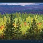 驯鹿森林图片集Nenets{摄影集12#}北极边城的传统与现代的图片 第10张