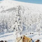 驯鹿森林图片集reindeer{摄影集16#}那趟西伯利亚的意外之旅的图片 第3张