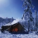 驯鹿森林图片集reindeer{摄影集16#}那趟西伯利亚的意外之旅的图片 第9张