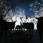 驯鹿森林图片集reindeer{摄影集16#}那趟西伯利亚的意外之旅的图片 第10张
