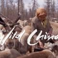 驯鹿森林电影/纪录片/舞台剧reindeer{电视节目1#}凤凰卫视-呼唤远去的敖鲁古雅的图片 第3张