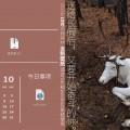 驯鹿森林小玩意2016年历{小玩意4#}2016年驯鹿年历鼠标垫的图片 第16张