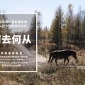 驯鹿森林电影/纪录片/舞台剧1963{纪录片18#} 秘境中的兴安岭的图片 第3张