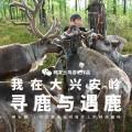 驯鹿森林图片集使鹿部落{摄影集19#}网易看客: 森林繁茂之地的图片 第44张